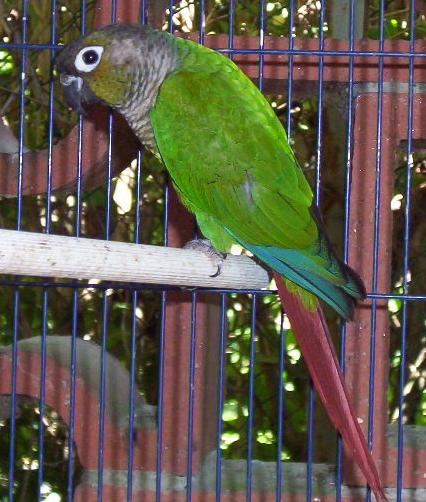 oiseaux bizarres photos